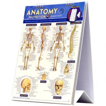 La Anatomía Y La Nutrición De Caballete - -654614022677-0